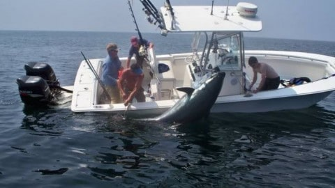Video and Story of Massive, Viral Bluefin Tuna That Almost Tipped Over Boat