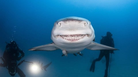 Grinning Lemon Shark is Real Life Bruce From 'Finding Nemo'
