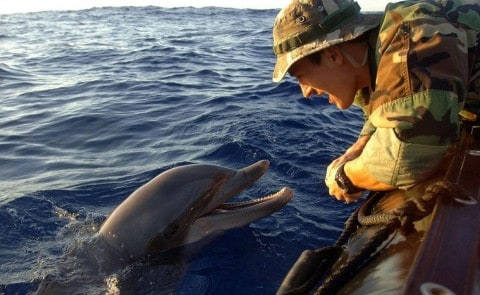 Russian Military Buys Five Dolphins for Combat Operations…Seriously