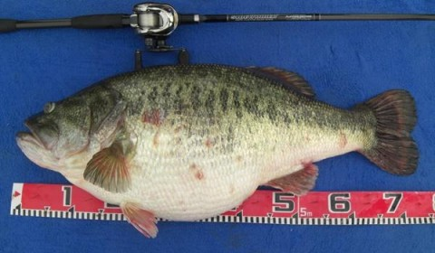 Biggest Largemouth Bass Ever is so Freakishly Big It Defies Reality