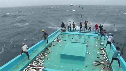 Video of Cane-Polling Tuna Will Make Your Head Spin