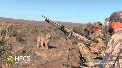 Unbelievable Close-Up Stare-Off Between Hunters and Bobcat Caught on Video
