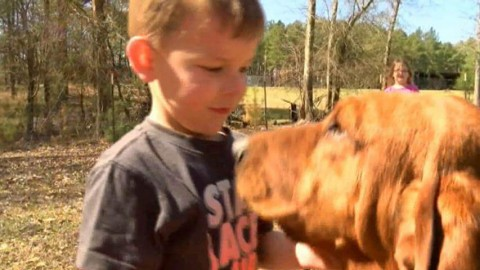 Hound Dog Finds Missing Three-Year-Old Boy