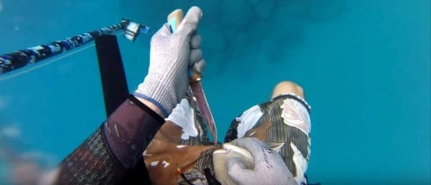 Triggerfish Attacks Spearfisherman in the Unmentionables