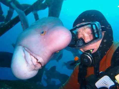 Friendship Between Diver and Fish Still Going Strong After 25 Years