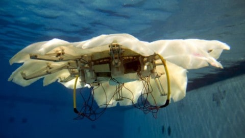 Engineers Create Robotic Jellyfish for U.S. Navy