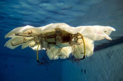 Engineers Create Robotic Jellyfish for U.S. Navy