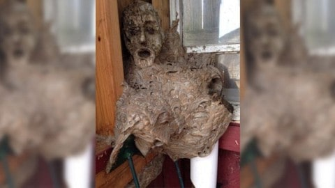 Scariest Hornets Nest Ever is Pure Nightmare Fuel
