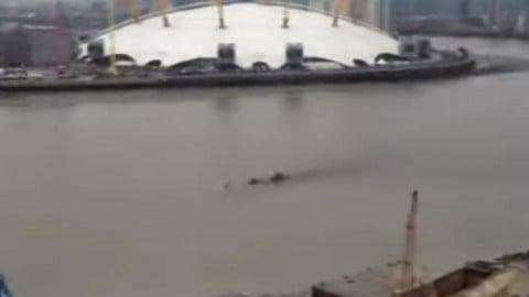 Mysterious 'creature' surfaces in River Thames