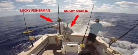 Luckiest Fisherman Ever Just Misses Getting Impaled by Marlin on Video