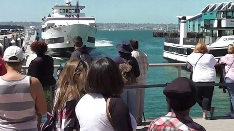 Whale Watching Boat Smashes Into Crowded Dock on Video; Several Injured