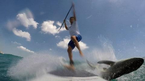 Shark Jumps on Paddleboard, Knocks off Paddleboarder on Video