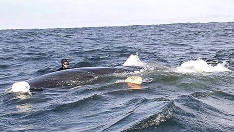 Frightened Humpback Approaches Boat, What Happens Next is Amazing