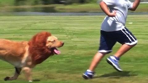 'Lion Dog' Wreaks Havoc on Pedestrians, Terrifies Town