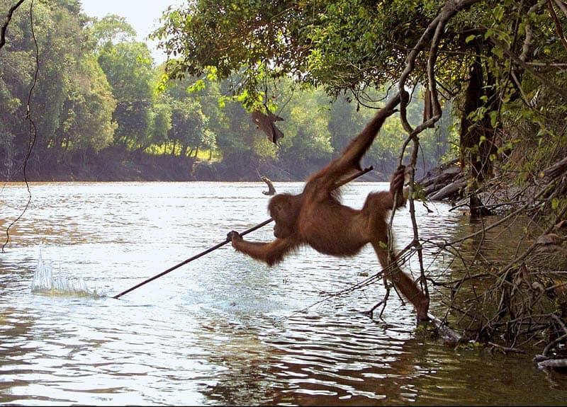 Image: primatology.net