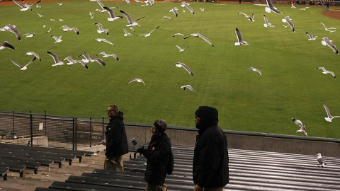 Epic Squad of Seagulls Overtakes Giants Stadium During Game