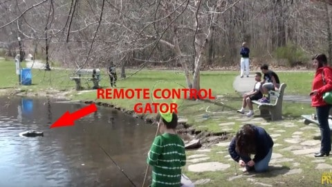 Remote Control Alligator Prank Goes So Well (Or Wrong), Police Show Up