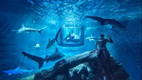 Spend the Night Sleeping With 35 Sharks in Transparent, Underwater Bedroom