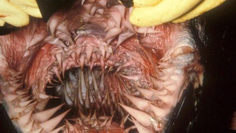 Leatherback Sea Turtle Photo Goes Viral Because It's Mouth is Absolutely Terrifying
