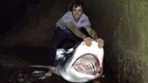 Fisherman Could Face Charges After Taking Selfies With Tiger Shark and Releasing It