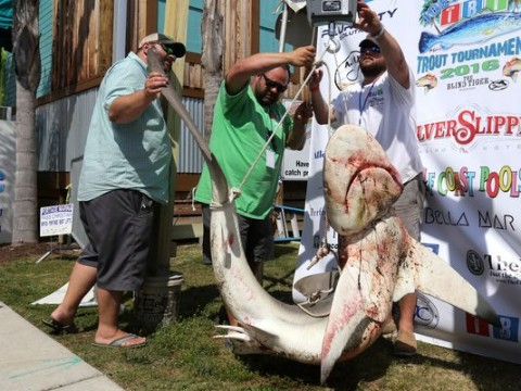 Federally Protected Shark Mistakenly Entered In Tournament