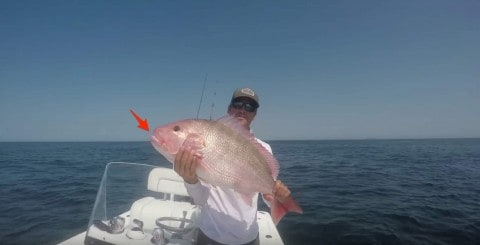 Monster Snapper Caught Using a Banana Puts the Superstition to Rest