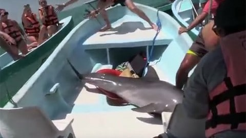 Dolphin Accidentally Jumps Into Boat; What Happens Next is Remarkable