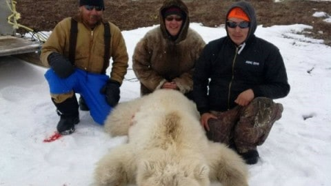Hunter Kills Extremely Rare Grizzly-Polar Bear Hybrid