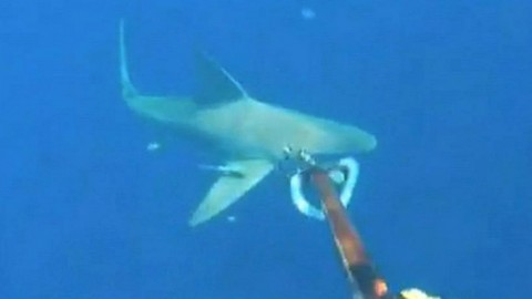 Diver Stranded in Shark Infested Waters, Daughters Stuck on Drifting Boat, GoPro Captures it All