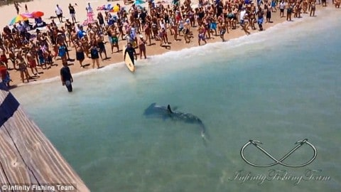 Massive Hammerhead Shark Caught From Pier in Front of Shrieking Beach Crowd