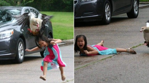 5-Year-Old Girl Attacked by Goose, Now the Pictures are Going Viral