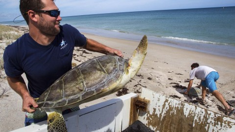 Power Plant Has Sucked in Thousands of Sea Turtles