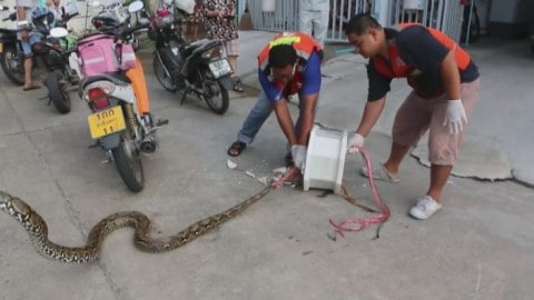 Man Bitten by Monstrous Snake While Using Toilet in Horrifying Incident