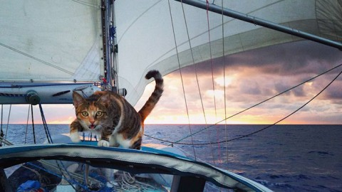 Woman Quits Job, Sails Around the World With Ocean-Loving Rescue Cat