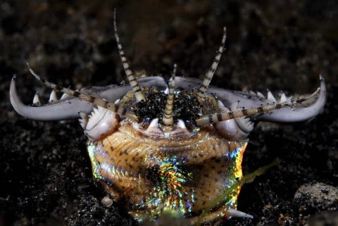 Bobbit Worm is a Very Real 10-Foot Terrifying Killer Sea Worm Straight From a Horror Movie