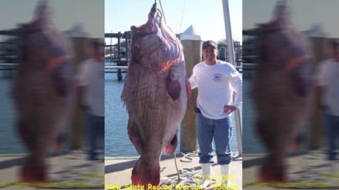 Exclusive True Story and Video of the Record Warsaw Grouper (Not Goliath Grouper)