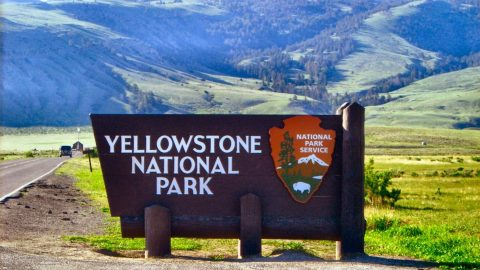 Woman Struck and Killed by Car While Photographing Eagle in Yellowstone National Park