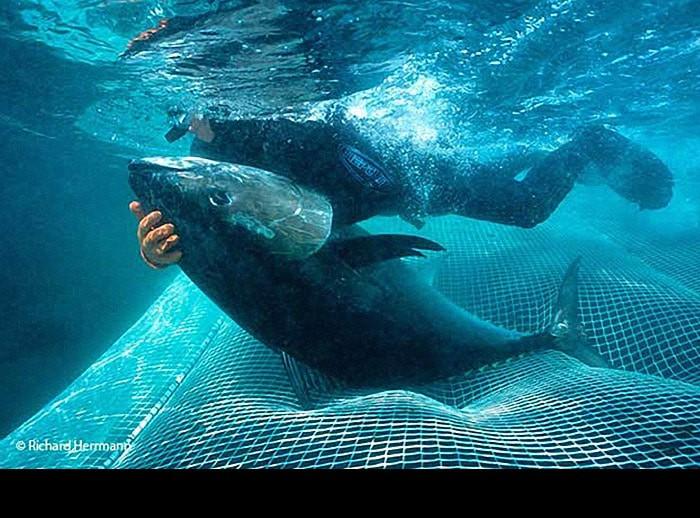Tuna cowboys battles huge seas sharks and tuna in for Tuna fishing show