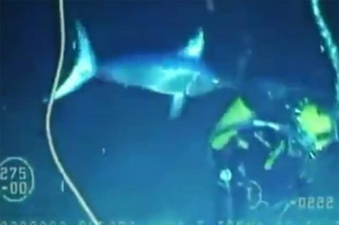 Swordfish Attacks and Nearly Impales Diver on Video