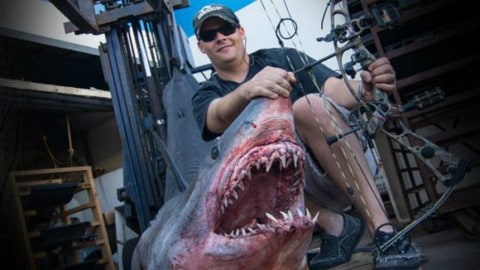 See the Insanity of an 809.5LB World Record Mako Shark Shot With a Bow