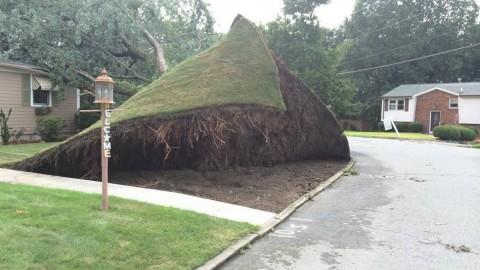 Fallen Tree Photoshop Battle Proves Redditors Can Make Anything Awesome