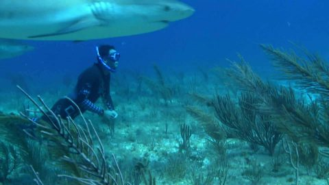 Jaw-Dropping Video of World Champion Free-Diver Exploring the Ocean 'On A Long Breath' … For Six Plus Minutes