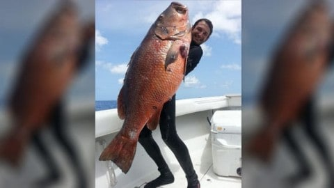 Incredible Story of Steel Rocket's Monster 87-Pound Cubera Snapper