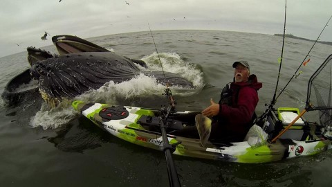 Kayaker Nearly Gets Squashed During Epic Whale Hug