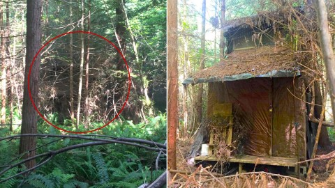 Ranger Stumbles Upon Hidden Cabin in Forest, Discovering a Strange Mystery