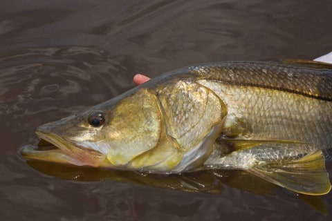 Southwest Florida Fishing Forecast – October