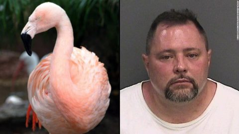 'Pinky' The Dancing Flamingo KILLED By Enraged Guest At Amusement Park