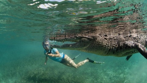 Father and Daughter Swim With 8-Foot-Long Crocodile