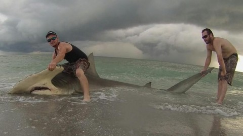 Three Fishermen Catch Monster 13-Foot Hammerhead off Beach