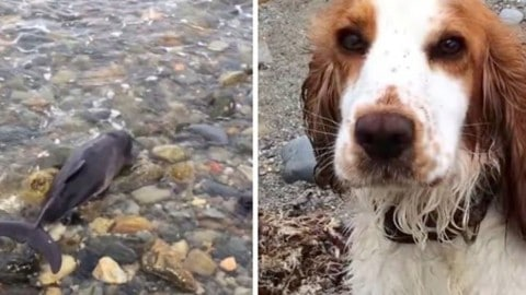 Hero Dog Rescues Baby Dolphin Stranded On Beach